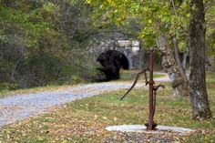 The west entrance of the Paw Paw Tunnel along the Chesapeake and Ohio Canal National Historical Park in Allegany County, Md.