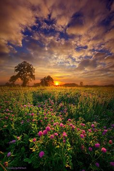 Summer Field Sunset ~ Marvelous Nature