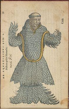 Monk fish, natural history, illustration