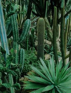 Cactus garden via sloth unleashed