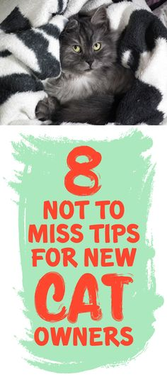 8 Not To Miss Tips For New Cat Owners