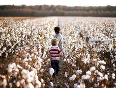 Walking through the cotton field
