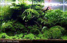 Tobias Coring a aquascaping - Aqua Rebell Aquarium Aquascape, Planted Aquarium, Aquascaping Plants, Aquarium Garden, Aquarium Terrarium, Betta Aquarium, Nano Aquarium, Nature Aquarium, Aquarium Design