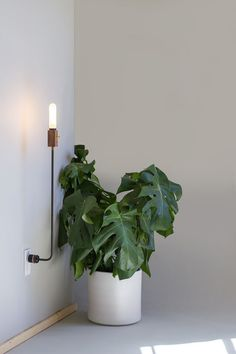 Wald plug lamp designed and made by the Los Angeles studio Feltmark