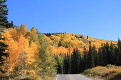 Travel | Utah | Fall Foliage | Natural Beauty | Autumn Leaves | Road Trip | Alpine Loop | Canyons