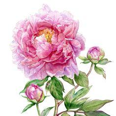 Приятного вечера, дружочки! И цветочков Вам в ленты  Я все учусь сканы зачищать, хоть бы кто показал как надо, и надо ли вообще
