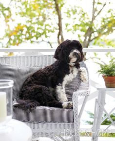 Portuguese water dog Mojo gets some sun at his family's cottage. | Photographer: Virginia Macdonald Designer: Michael Angus