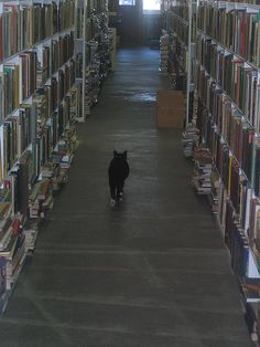 """I am the Cat who walks by himself, and all places are alike to me"" Rudyard Kipling - book shelves"