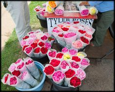 Tyler Texas Roses - my favorite thing when I go home!  Nothing like a dozen roses for $2