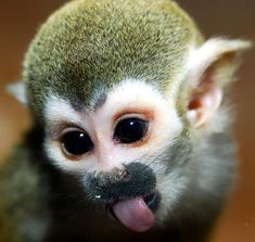 Cute Spider Monkeys