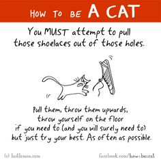 HOW TO BE A CAT: You MUST attempt to pull those shoelaces out of those holes.Pull them, throw them upwards, throw yourself on the floor if you need to (and you will surely need to) but just try your best. As often as possible.