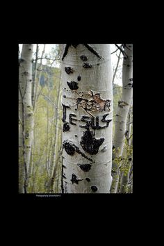 Is this someone's name written on one of the Aspen Trees high above Santa Fe, New Mexico, or was this done by someone who was proclaiming the name of their savior? You decide!  #kulish, #tamara, #carving, #tree, #aspen, #woods, #FAA, #fineartamerica, #reproduction, #print, #framing