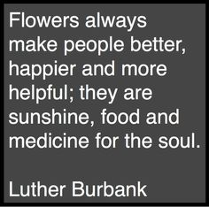 If anyone knew about flowers, it was Luther Burbank. Great Quotes, Quotes To Live By, Me Quotes, Inspirational Quotes, Fleur Design, Garden Quotes, Flower Quotes, Luther, Wise Words
