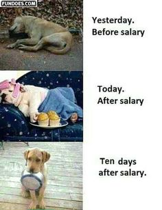 Salary funny memes in www.fundoes.com/ to make laugh.