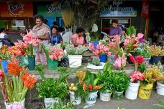 Women selling flowers at the market