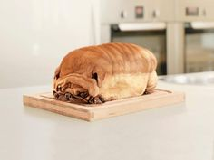 pug loaf! - how do you even do that!?!?!?