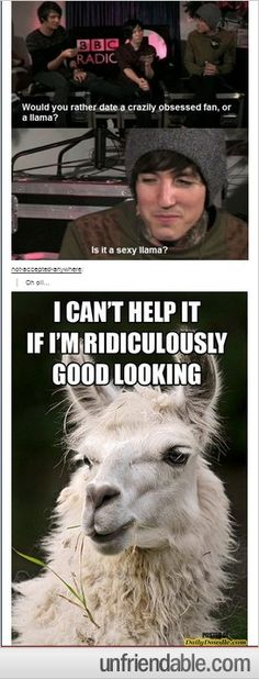 Llamas are always sexy, never question it!