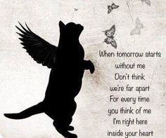 Eleven months since our baby fell asleep.miss you my Special Angel Jack Always in our hearts xxxxx Pet Quotes Cat, Pet Loss Quotes, Animal Quotes, I Love Cats, Crazy Cats, Pet Loss Grief, Pet Remembrance, Pomes, Cat Memorial