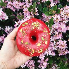 What are Sunday mornings for if not for vegan donuts fresh coffee and spring blooms?