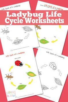 Ladybug Life Cycle Worksheets and Diagrams - Free Printable