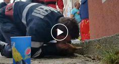 Bombeiro Salva Cão Ao Fazer Respiração Boca-a-Boca Após Incêndio