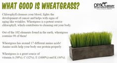 You can easily grow wheatgrass at home by putting wheat seeds in water and harvesting the leaves that grow!