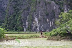 "The 5-day bicycle tour, provided by Lotussia Travel to the Vietnam north-western area includes such travel highlights as Hanoi city tour by bike, cycling Mai Chau village, biking Pu Luong Nature Reserve and bike riding in Tam Coc or ""Halong bay inland"". We us private A/c vehicle for transfers and support and professional trek bikes."