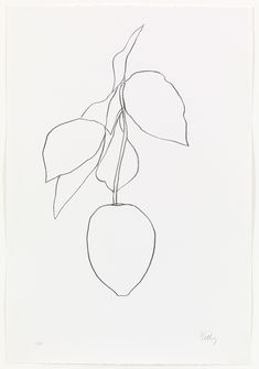 Ellsworth Kelly. Lemon (Citron) from Suite of Plant Lithographs. 1964-65, published 1966