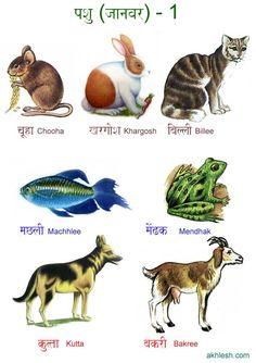 Animals in Hindi हिन्दी में जानवर (Hindi taal en zuid aziatische cultuur aan de Universiteit Leiden)