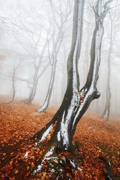 ~~Snow Striped Forest | foggy day among the trees, Czech Republic | by Martin Rak~~