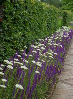A lovely inversion of the normal colour scheme: white Allium nigrum above purple Salvia x superba. Garden Border Plants, Garden Borders, May Night Salvia, Allium Flowers, Potager Garden, Landscaping Plants, Landscaping Ideas, Garden Crafts, Garden Inspiration