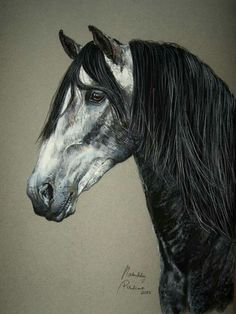 Spanish Andalusian Horse drinking   ... white horse on Pinterest   Spanish, Arabian horses and White horses