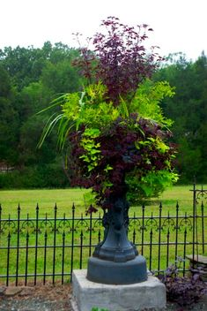 Purple plant is a Japanese maple, spikes are dracaena, purple trailing foliage looks like coleus, lime green trailer is sweet potato vine, green around base of maple are multiple plants – and tough to make out.