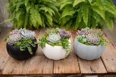 Sophisticated pumpkins in black, white or grey - overflowing with gorgeous pastel succulents! We've paired them with bright green reindeer moss and. Succulent Pots, Cacti And Succulents, Planting Succulents, Succulent Ideas, House Plants Decor, Plant Decor, Autumn Garden, Autumn Home, Fall Planters