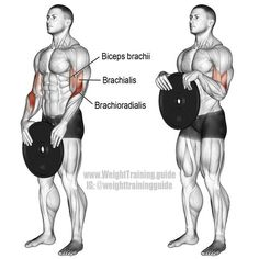 Weight plate reverse curl. Main muscles worked: Brachioradialis, Biceps Brachii, and Brachialis. Also known as a weight plate overhand curl.