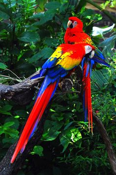 Exotic Bird. Macaw.  |Pinned from PinTo for iPad|