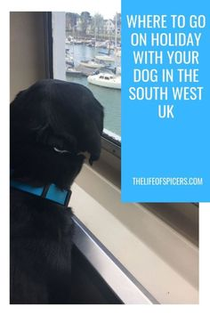 Travelling With Wightlink Ferries To The Isle Of Wight - The Life Of Spicers Holiday Park, Holiday Resort, Going On Holiday, Beach Holiday, Dog Travel, Family Travel, Travel Uk, Travel Tips, Adventure Golf
