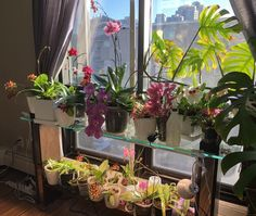 The Down Side to Semi Hydro (S/H) and Full Water Culture (FWC) for Orchid Care » Here—But Not