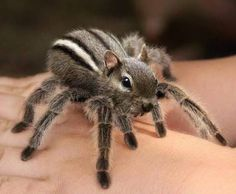 Squirrel Vs Spider The Most Weird And Scary Photoshopped Hybrid Animals You'll Ever See • Page 3 of 6 • BoredBug