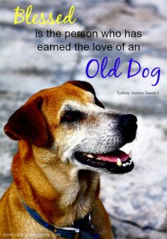 Senior dog quote. The blessed love of an old dog.