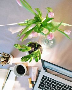 Sun at home, fresh flowers next to me, coffee, snow outside and work I like... I love those kind of days 💕👩🏼💻 #goodmorning #morning #work #coffee #coffeetime #sunnyday #sunshine #sunlight #winter #wintertime #january #freshflowers #tulips #tulipany #pink #thinkpink #pinktulips #blog #blogger #bloggerlife #flowers #flowerslovers #vscocam