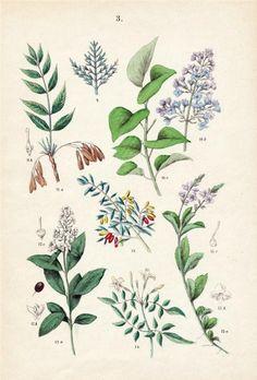 botanical-print-4