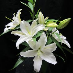 Flower in season in March: Casablanca Lily. Classic, beautiful, we buys these every week at the flower market.