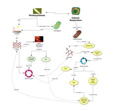 life science concept map photosynthesis and cellular respiration. Black Bedroom Furniture Sets. Home Design Ideas