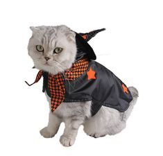 Are you wondering what you should dress your pet up for #halloween? Have you ever thought that being a witch might be the thing to scare the tricker treaters away? Well we've got you covered with this cute and adorable witches costume. Its available in two different sizes Perfect for Cats 🐱 or Dogs 🐶, for Halloween 🎃 or just for fun. We have the best quality pet costumes so rest assured you won't be disappointed with your purchase. #petcostume #dogs #cats #petsupplies #funnypets Pet Halloween Costumes, Funny Costumes, Pet Costumes, Christmas Costumes, Christmas Gifts For Pets, Christmas Animals, Fitness Gym, Cats And Kittens, Dog Cat