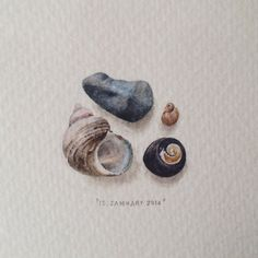 Day 13 : Bakoven beach treasures. 27 x 22 mm. #365postcardsforants #wdc624 #miniature #watercolour #shell #collection (at Bakoven)