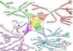 Endocrinology - myfinalsnotes