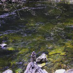 "34 Likes, 3 Comments - T  W  E  E  D  I  A (@tweedia_media) on Instagram: ""Lyon Clear @annewoodcock #riverlyon #ginclear #salmonfishing #flyfishing #atlanticsalmon…"""