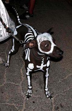 hermoso disfraz de hallowen