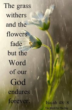 The grass withers, the flower fades, When the breath of the LORD blows upon it; Surely the people are grass. The grass withers, the flower fades, But the word of our God stands forever. Isaiah 40:7-8